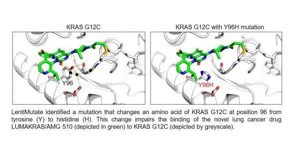 Hunting down the mutations that cause cancer drug resistance