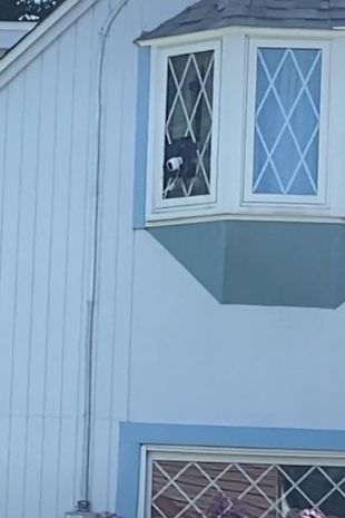 Couple hang washing line to block neighbours view after she 'installs five cameras'